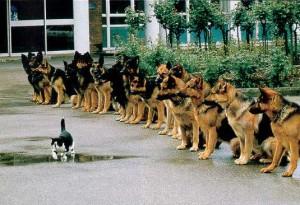 Cat Dogs
