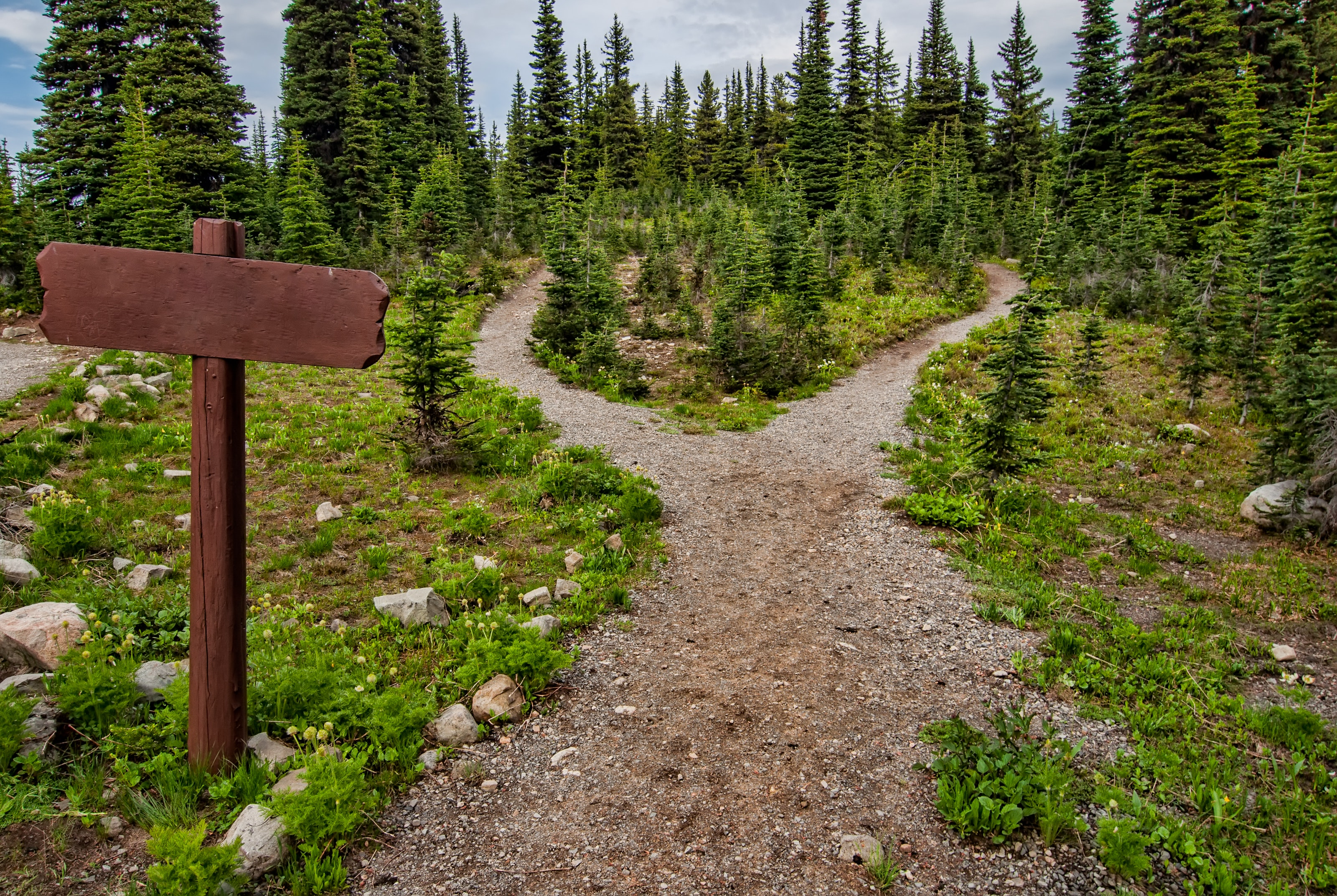 photo-of-pathway-surrounded-by-fir-trees-1578750